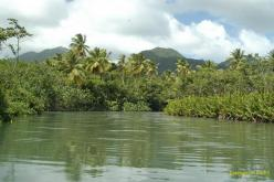 Dominica: Indian River