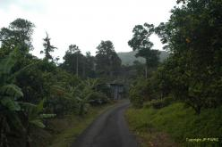 Dominica: Syndicate Estate