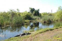 Arensas National Wildlife Reserve
