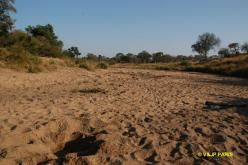 Kruger: Napi Wilderness Trail Experience
