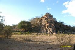 Kruger: Road from Satara to Letaba