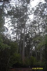 Manjimup,  Four Aces